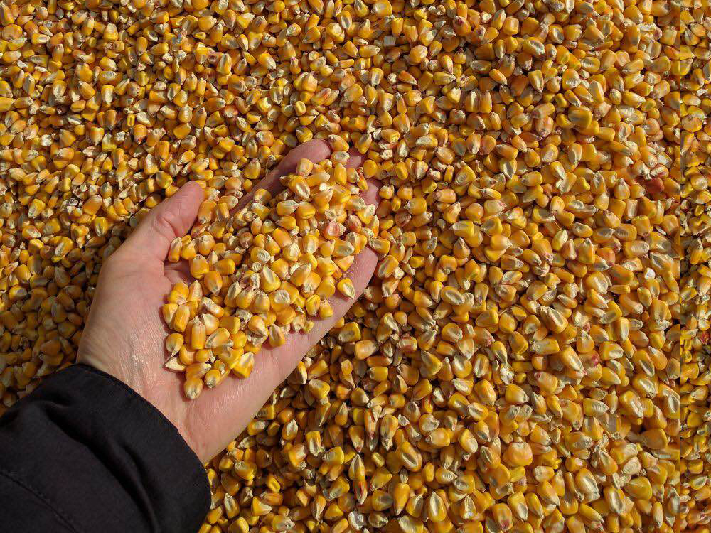 AGRISEA FOODSTUFF TRADING LLC, U A E